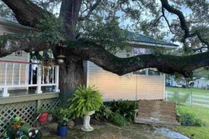 2011 CR 118 Burnet TX 78611 exterior tree with bench swing