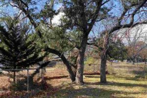 101 N Harrell St in Lampasas TX fenced-in backyard with trees