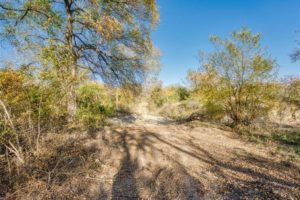9018 N FM 1174 300 acres of land for sale in Burnet, TX with trees