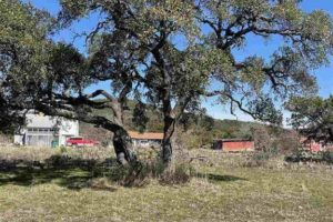 Tree on .75 acre land for sale TBD CR 130 in Burnet, TX