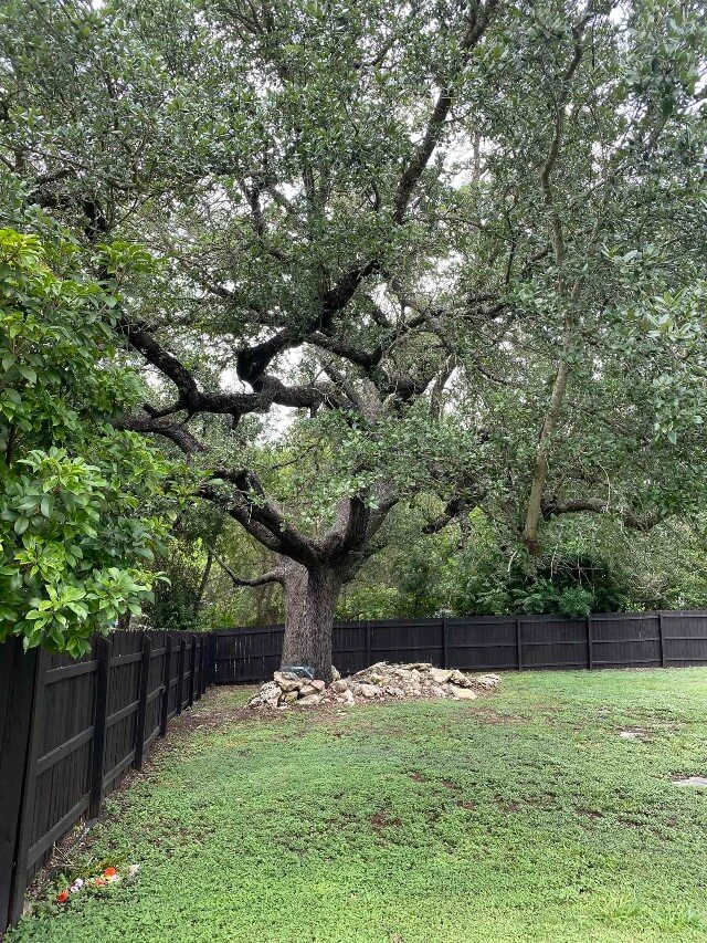 409 S Rhomberg St townhouse backyard tree